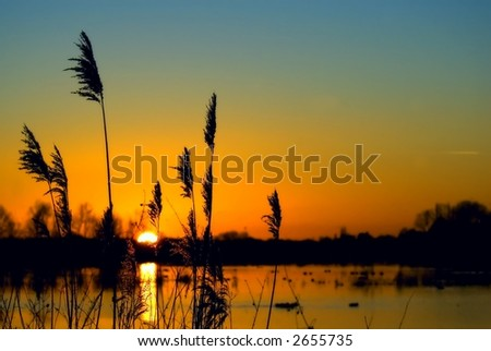 colorful sunset over a wetland, with some wheats in the foreground - stock photo