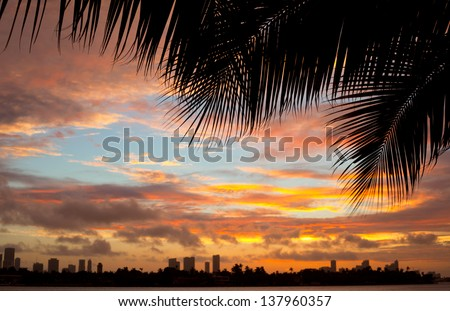 Colorful sunset with palm tree silhouettes and clouds over the city of Miami Florida - stock photo