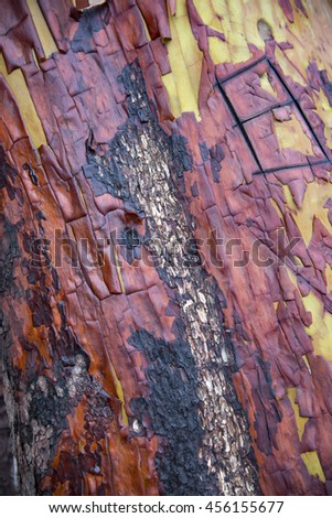 Colorful textured Manzanita tree surface showing fire damage - stock photo