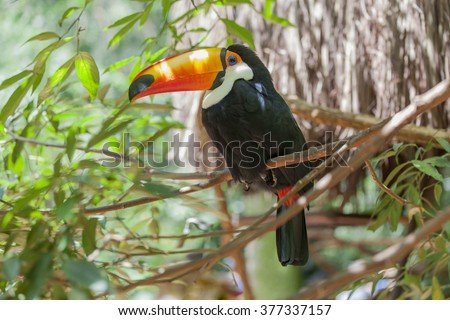 Colorful toucan sitting on a branch in a natural environment - stock photo