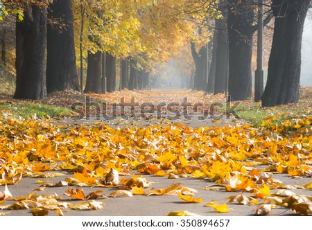 Colorful tree alley in the autumn park on a sunny day in Krakow, Poland - stock photo