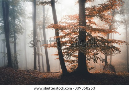 colorful tree in misty forest in fall - stock photo