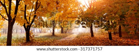 colorful trees and rural road in deep autumn forest, natural background - stock photo