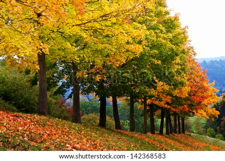 Colorful trees in autumn - stock photo