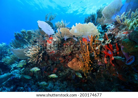 Colorful tropical coral reef in the caribbean sea  - stock photo