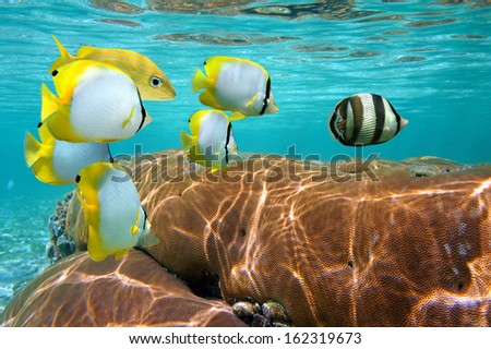 Colorful tropical fish and coral under water surface, Caribbean sea, Mexico - stock photo