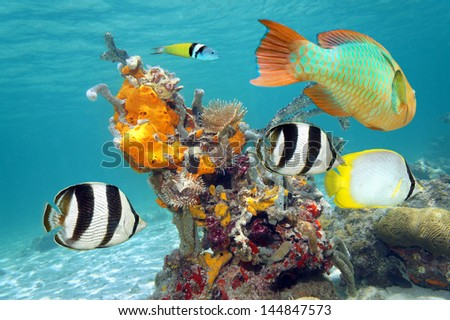 Colorful tropical fish and marine life underwater in the Caribbean sea, Mexico - stock photo