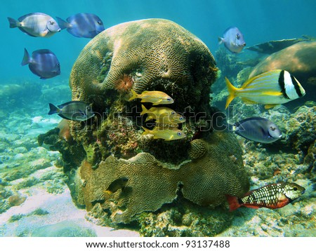 Colorful tropical fish in a coral reef of the Caribbean sea - stock photo