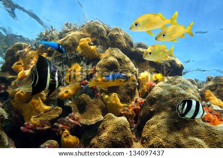 Colorful tropical fish in a shallow coral reef with sea sponges and marine worms, Caribbean sea - stock photo