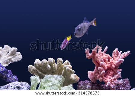 Colorful tropical fish swimming near a coral reef. - stock photo