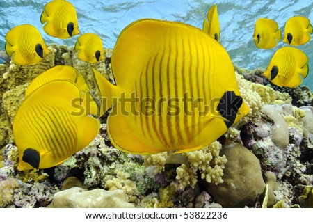 Colorful tropical fishes - stock photo