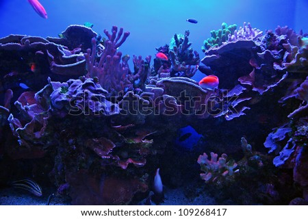 Colorful Tropical Hawaiian Pacific Fish in Aquarium Exhibit - stock photo