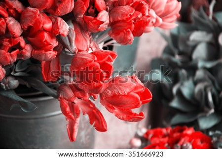 Colorful tulips and buttercups flowers. Selective focus. Toned photo. - stock photo
