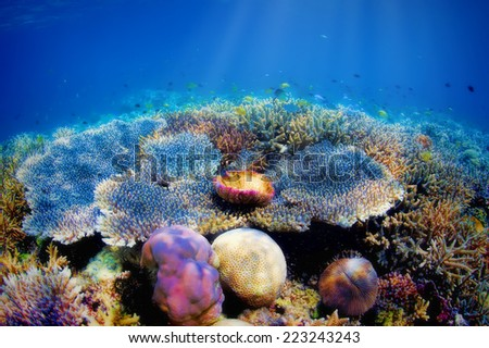Colorful underwater coral reef on Komodo island - stock photo