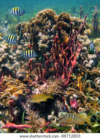 Colorful underwater marine life in a thriving coral reef of the Caribbean sea - stock photo