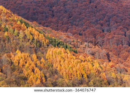 Colorful vibrant autumn trees in the forest. Mountains of Lugano, Switzerland - stock photo