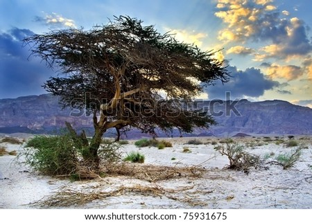 Colorful view on mountains and rocks of Timna park, Israel - stock photo
