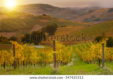 Colorful vineyard in autumn on sunset - stock photo