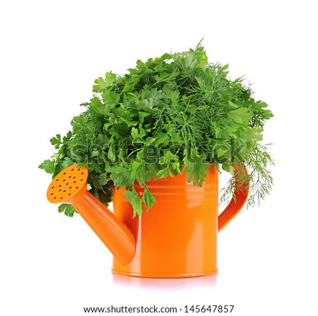 Colorful watering can with parsley and dill isolated on white - stock photo