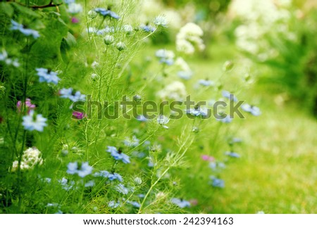Colorful wild flowers in  summer garden - stock photo