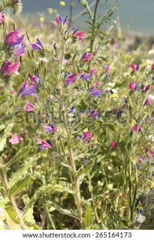 Colorful Wildflowers - stock photo
