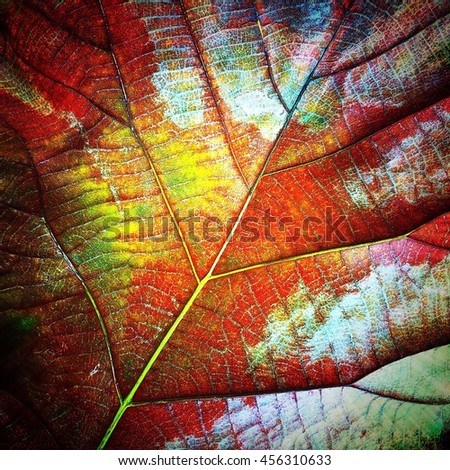 Colorfull A Dry Teak Leaf Texture Dead Leaf background Nature Degign. - stock photo