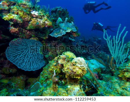 Colorfull reef and group of divers, Cayo Largo, Cuba - stock photo
