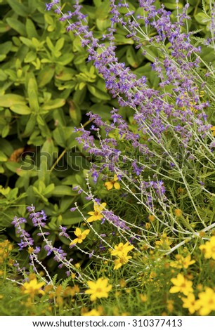 Colorfully contrasting summer wildflowers competing for pollination in summer time