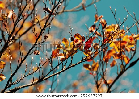 Colors of Autumn, leaves - stock photo