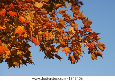 Colors of october in canada - stock photo