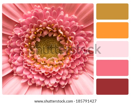 Colour palette with complimentary swatches. Flower concepts. - stock photo