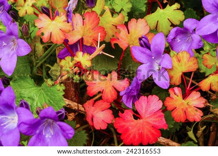 coloured flowers and leaves in the autumn - stock photo