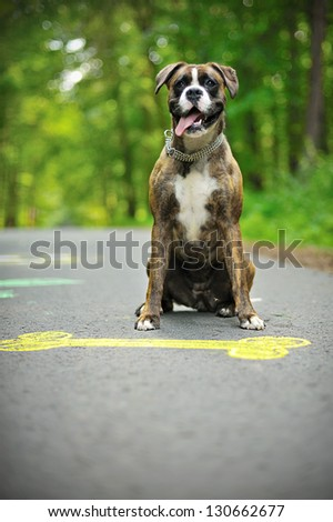 Colourful chalk picture of dog bone on street and happy boxer. - stock photo