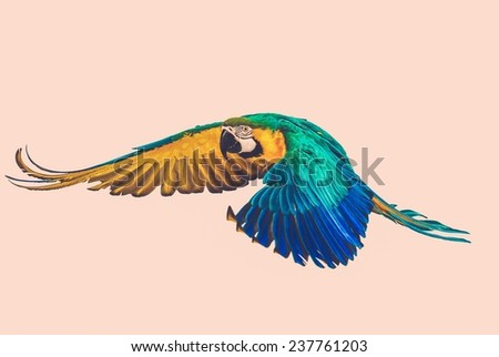 Colourful flying parrot toned - stock photo