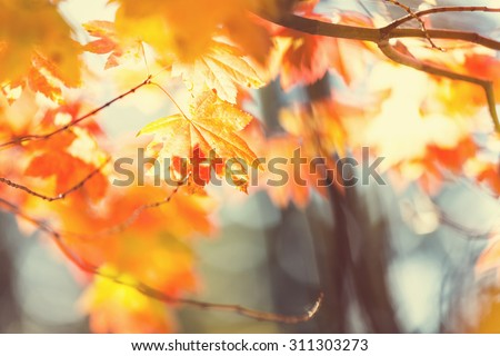 Colourful leaves in autumn season - stock photo