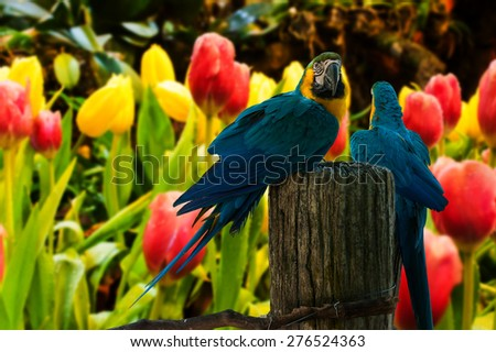 Colourful parrot bird sitting on the perch on Tulips flower background - stock photo