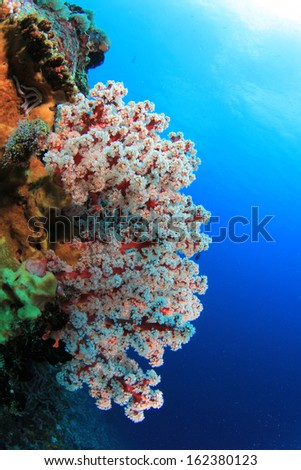 Colourful Soft Coral Underwater - stock photo