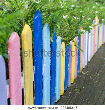 colourful wood fence in small garden with white flower - stock photo