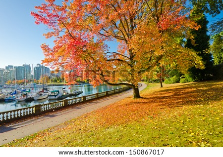 Colours of the autumn. Sea walk and colorful tree in Stanley park in Vancouver. Canada. - stock photo