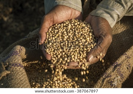 Colse up of a farmer's hand holding soyabean seeds. A healthy organic produce. - stock photo