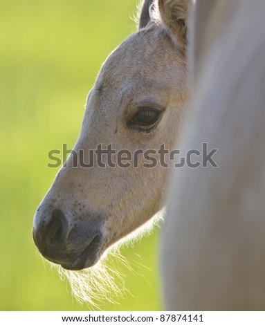 Colt and Mother  Saskatchewan Canada - stock photo