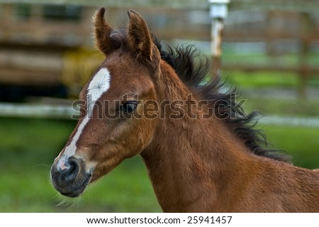 Colt head shot in profile - stock photo