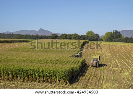 Combine harvester and tractor harvest maize crop for silage - stock photo