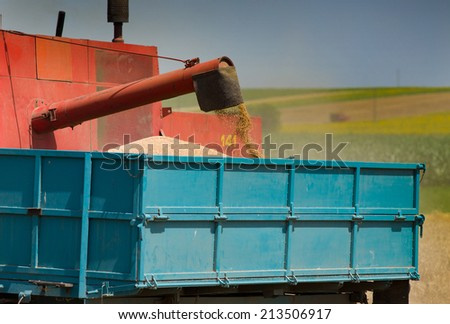 Combine harvester dumping wheat grains in trailer - stock photo