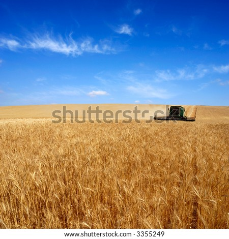 combine harvesting - stock photo