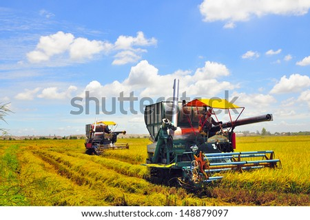 Combine machine harvesting in rice field - stock photo
