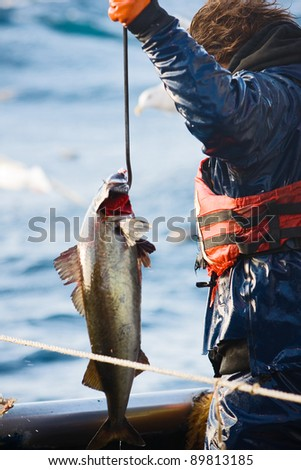 Commercial Fisherman with Catch 1 - stock photo