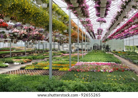Commercial greenhouse interior - stock photo
