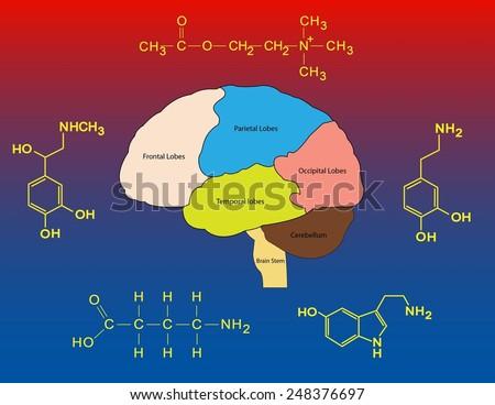 Common neurotransmitters - stock photo