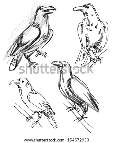 Common Raven. Set. Hand-drawn - stock photo